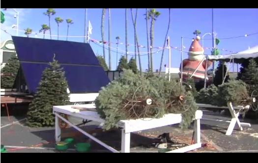Solar Powered Christmas Tree Lots