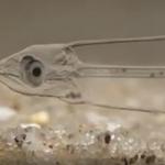 Transparent Fish
