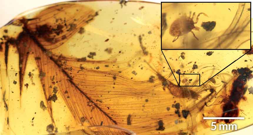 Ticks feasted on dinosaurs